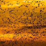 birds-sky